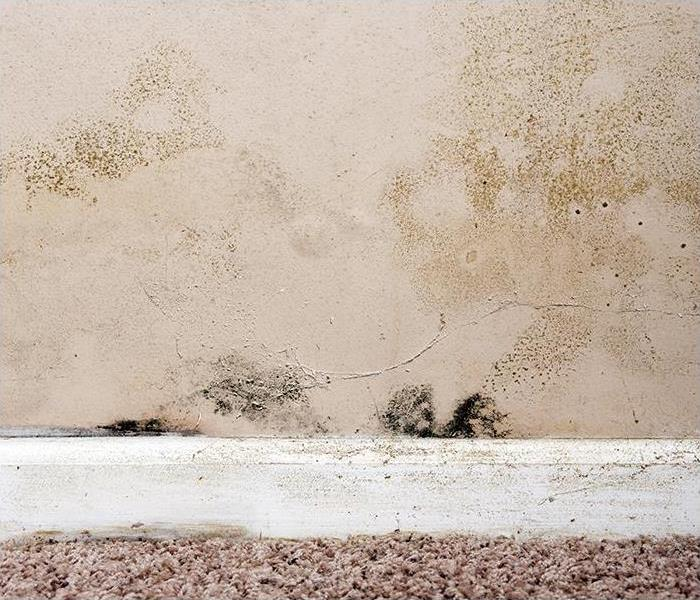 Mold Remediation What To Expect During Mold Damage Restoration In Your Bethlehem Home?