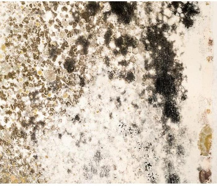 Mold Remediation Mold Damage in Your Taylorsville Home Needs a Fast Response